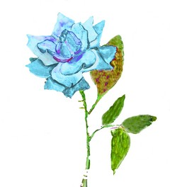 Blue Rose, painting