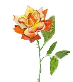 Rose, watercolor painting