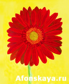 Red gerbera on yellow, watercolor