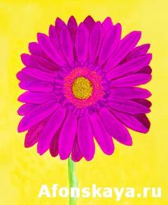 Pink gerbera on yellow, watercolor