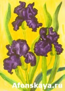 Three violet irises, watercolor