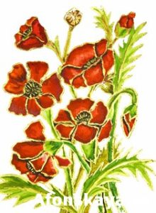 Poppies on white background, painting