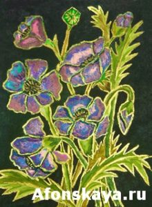 Pink-blue poppies on black background, painting