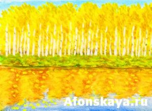 Yellow birch forest in autumn, painting