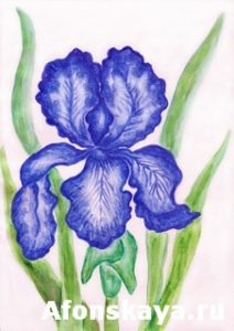 Dark blue iris, painting