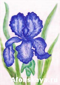 Dark blue iris, painting
