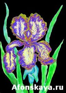 Blue-yellow iris, painting