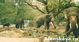слон Индия