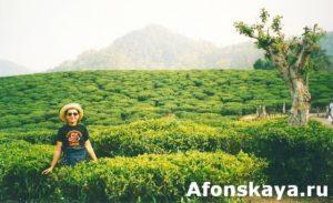 Индия индийский чай плантации