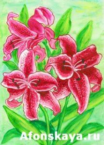 Crimson lilies