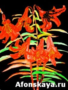 Orange lilies, hand drawn painting