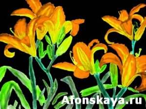 Orange-yellow lilies