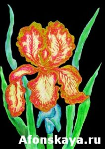 Red-yellow iris, painting
