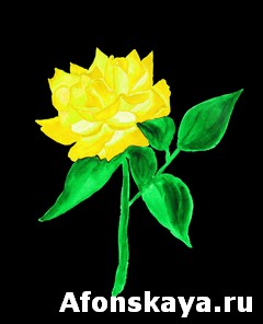 Yellow rose, painting