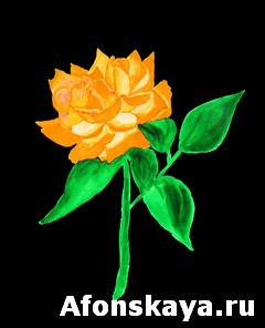 Orange rose, painting
