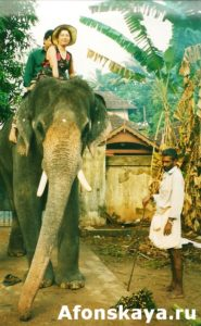 Индия катание на слоне