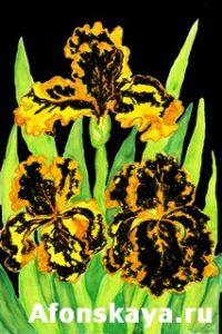 Three yellow-black irises, painting