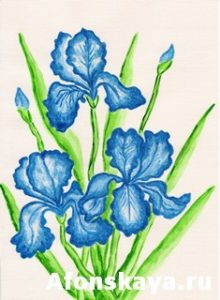 Three dark blue irises