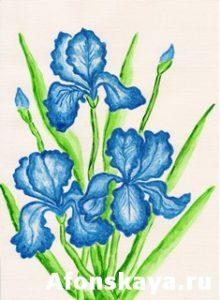 Three dark blue irises