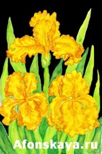 Three yellow irises, painting