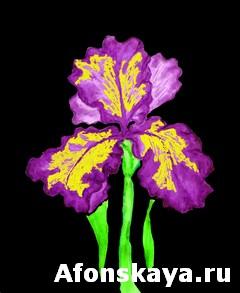 Violet-yellow iris, painting
