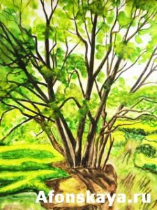 Tree, watercolors