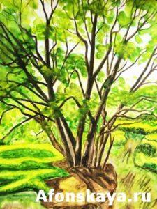 Tree, watercolors