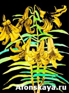 Yellow lilies, hand drawn painting