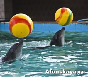 Two delphins with yellow balls