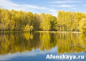Autumn, lake and birch forest