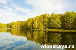 Lake with forest in autumn