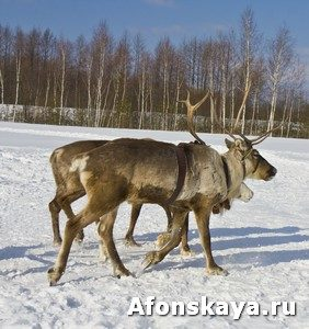 Deers running on snow