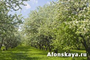 Москва Коломенское яблоневый сад