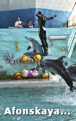 Крым дельфинарий