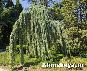 парк Айвазовского Крым