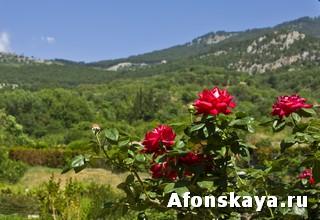Никитский ботанический сад Крым