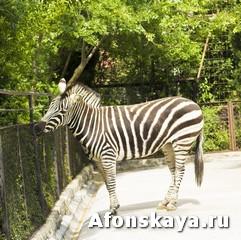 Крым Ялтинский зоопарк