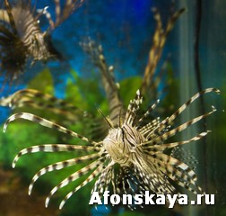 Крым Ялтинский аквариум