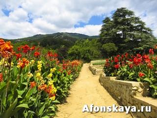 канны Никитский ботанический сад