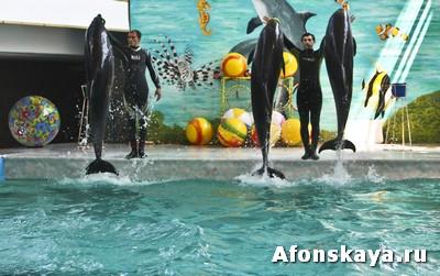 Дельфинарий в Евпатории Крым