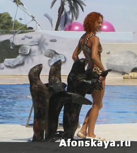 Севастополь дельфинарий