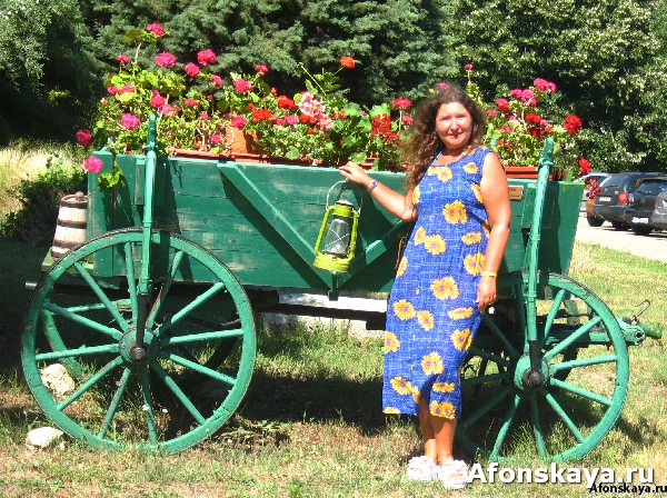 женщина, цветы, клумба